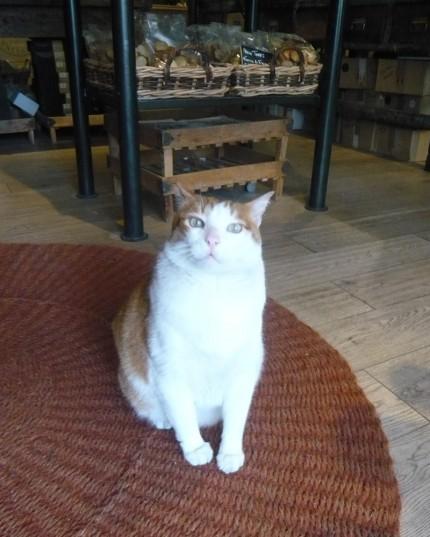 パリ買い付け日記 猫