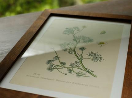 植物 ボタニカルアート